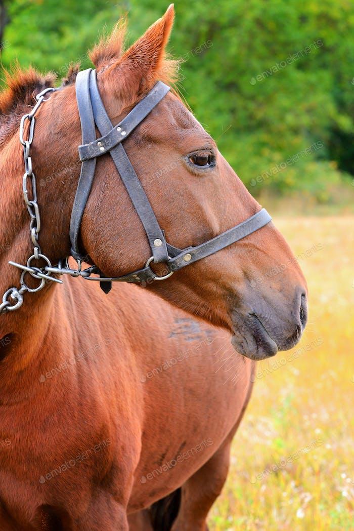 Porträt. Pferdekopf Nahaufnahme auf Naturhintergrund
