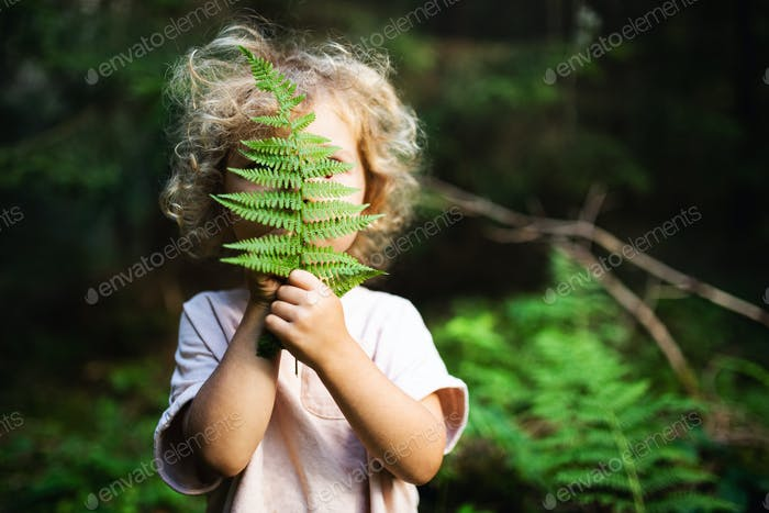 Unrecognizable small child outdoors in summer nature, hiding against fern leaf