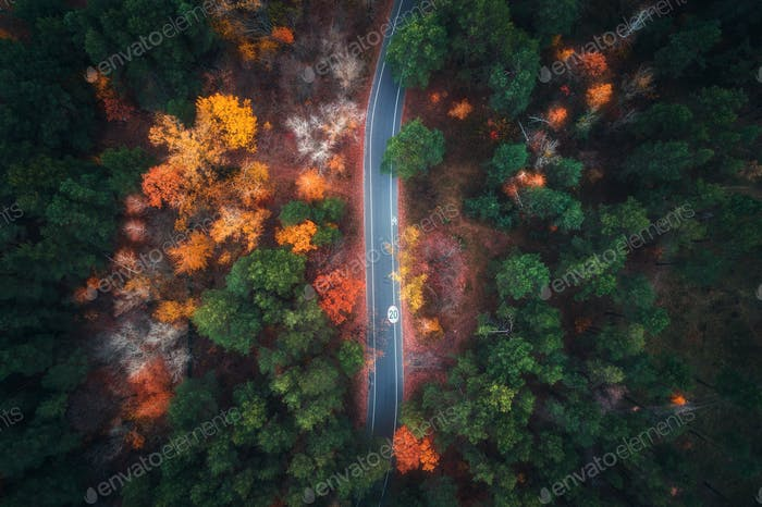 Aerial view of road in beautiful autumn forest