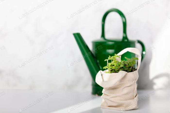 Baby plant against white marble wall in tote bag and vintage ceramic watercan