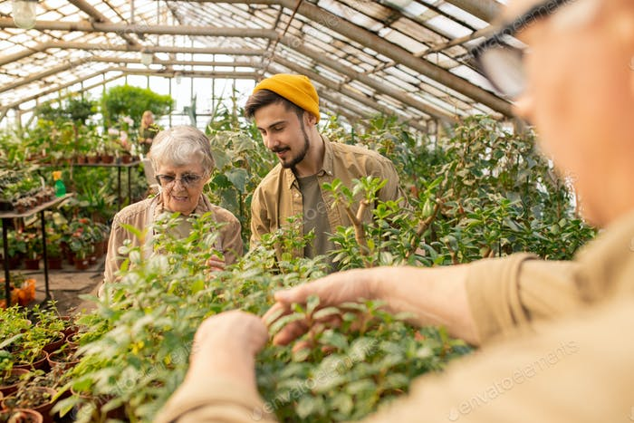 Working with grandmother in greenhouse