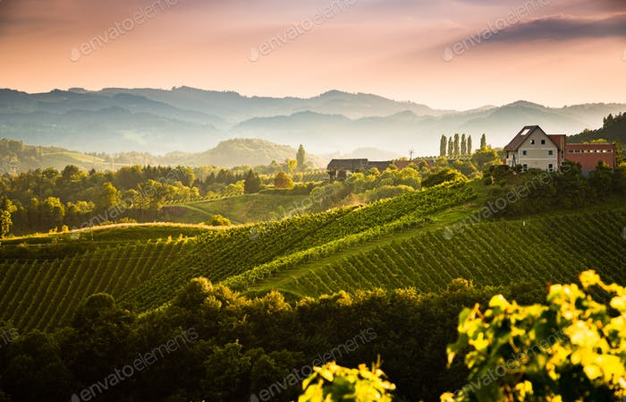 View from famous wine street in south styria, Austria on tuscany like vineyard hills