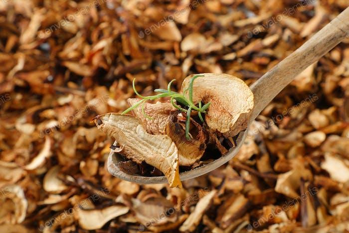 spoon of dried mushrooms