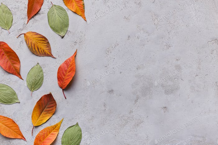 Autumn background of different colored fallen leaves on grey