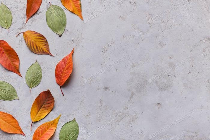Herbsthintergrund von verschiedenen farbigen gefallenen Blättern auf grau