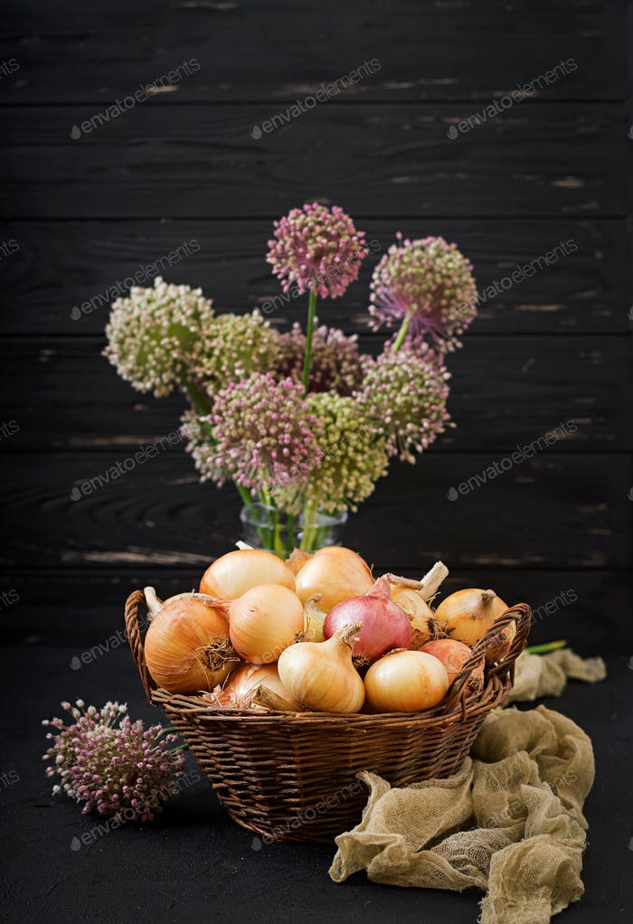 Fresh  young onion bulbs and onion blossoms. Flat lay. Top view
