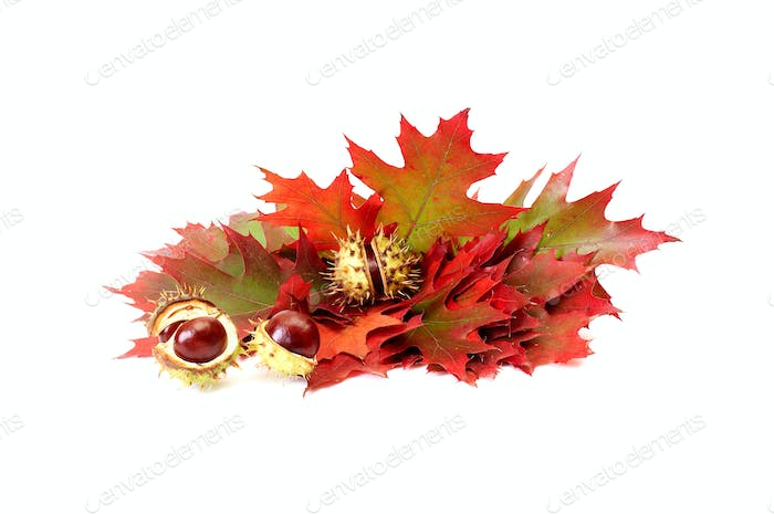 Wonderful autumn leaves and chestnuts on a white.