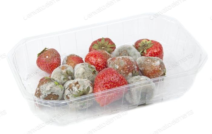 Rotten Schimmelige Erdbeeren