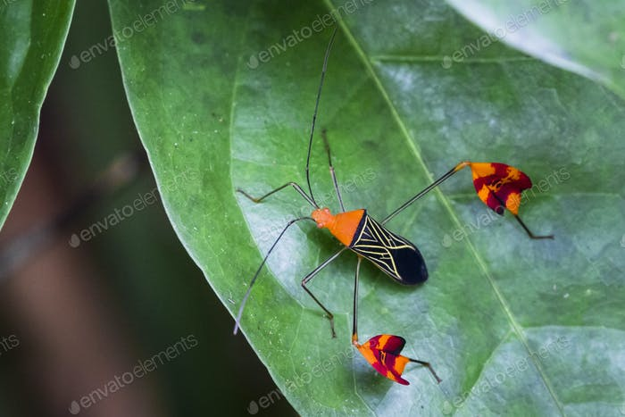 Leaf-footed Bug on a Green Plant in Costa Rica