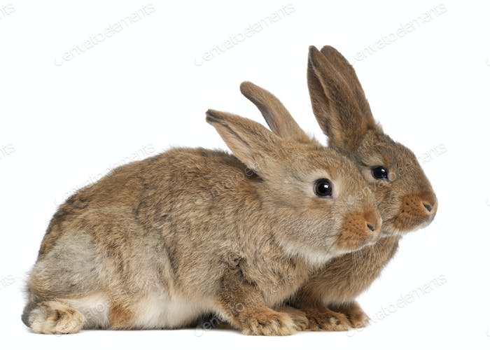 Two rabbits against white background