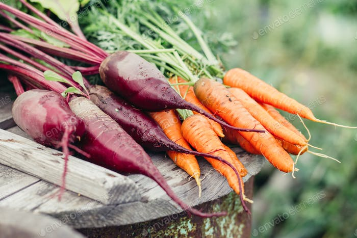 Bunch of fresh organic beetroots and carrots