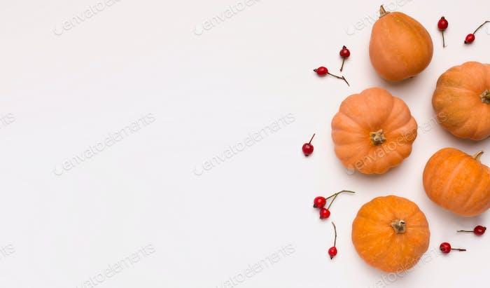 Flat lay of Orange pumpkins on white background