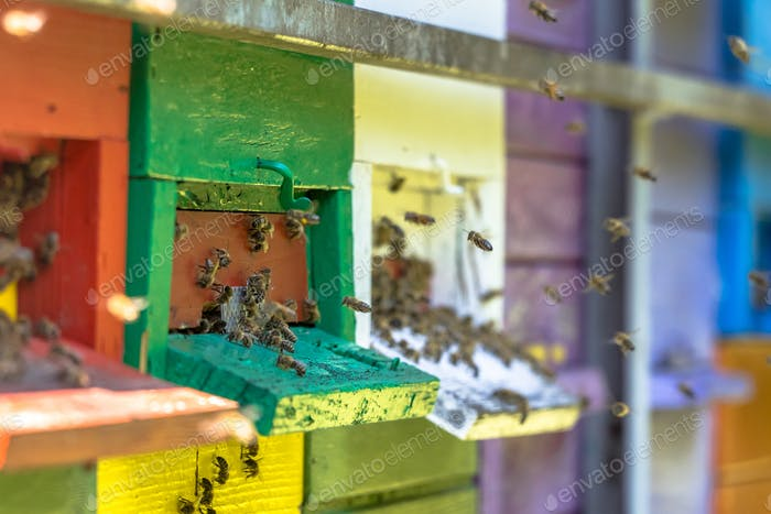 Bees flying to beehives in many colors