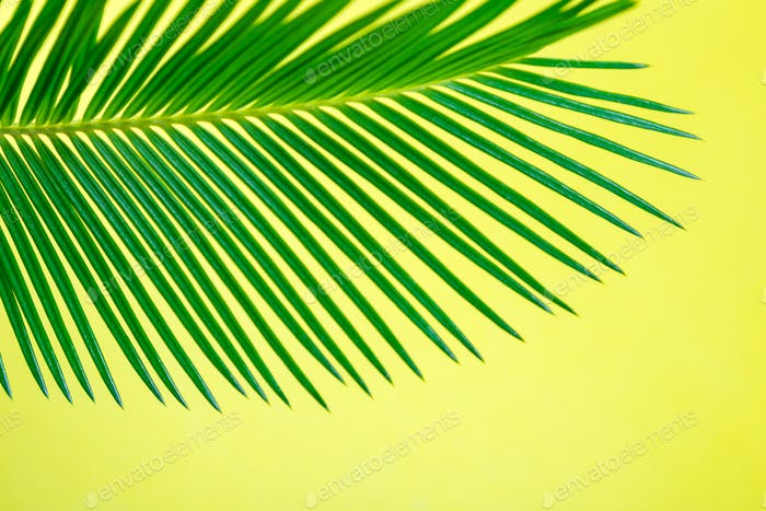 Tropical Background Palm Trees Branches. Holiday.
