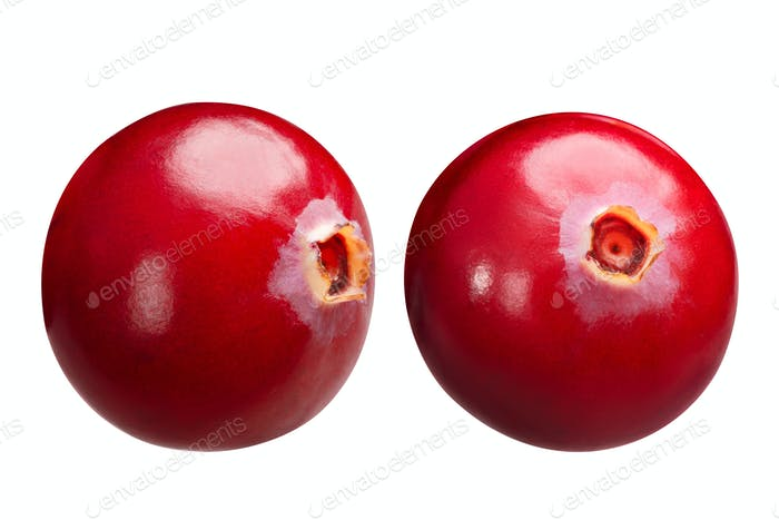 Cranberries v. oxycoccus singles, paths