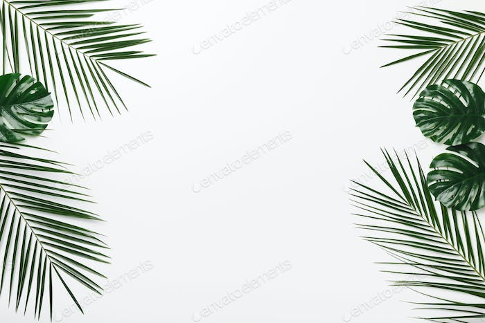 Creative Tropical frame of palm and Monstera leaves on white