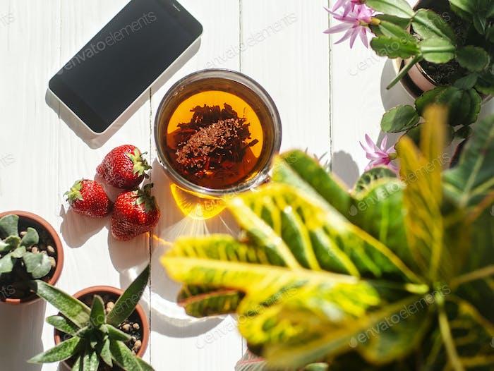 Glas Tasse Tee, rote Erdbeeren, Smartphone und Blumen in Töpfen auf hellem Holzhintergrund.