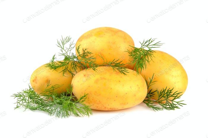 Kartoffeln mit grünem Dill