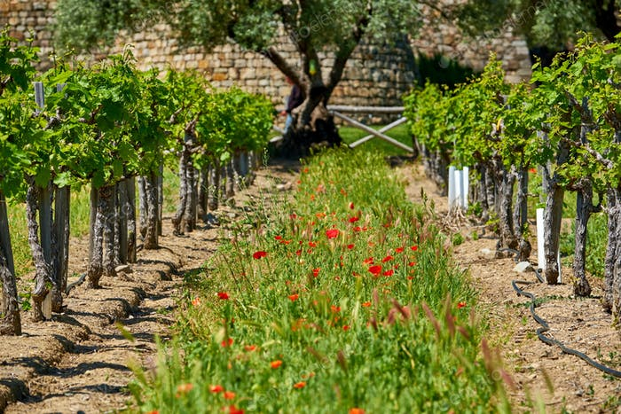 Vineyards with castle in California