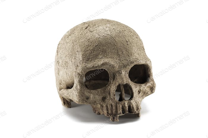 Halloween human skull isolated on white background