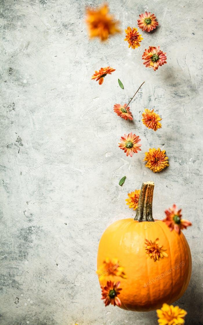 Schwebender Kürbis und Chrysantheme