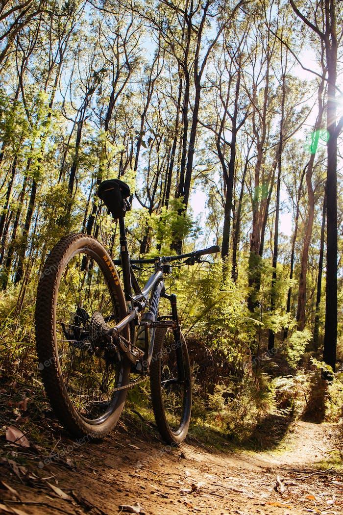 Buxton Mountain Bike Park in Australia