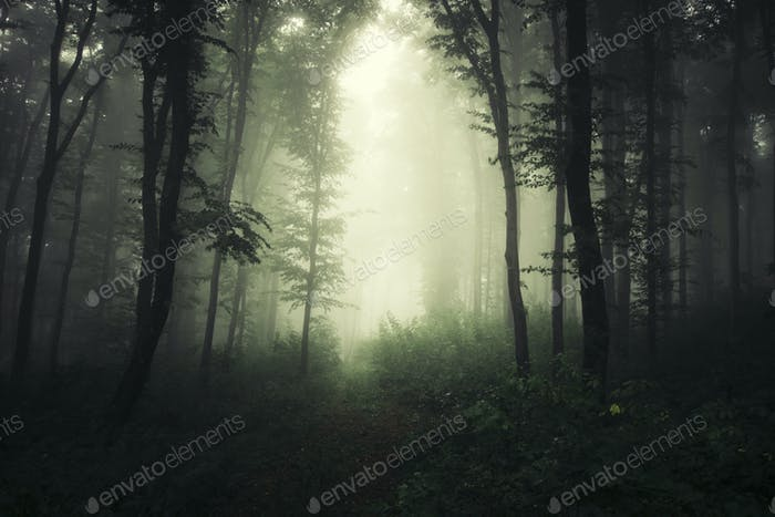Enchanted misty forest