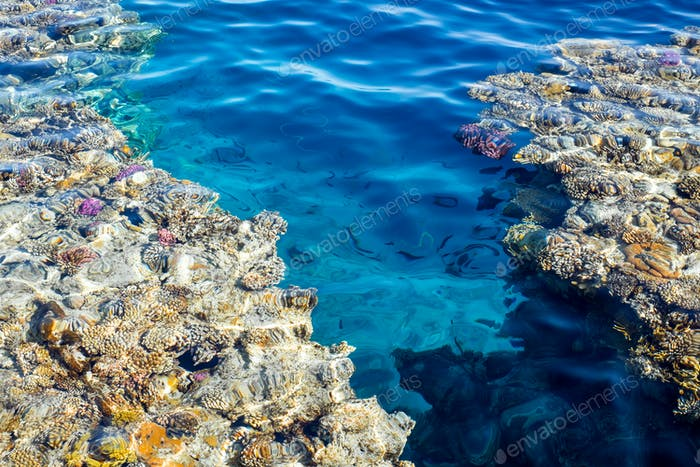 Coral reef in blue water of Red Sea