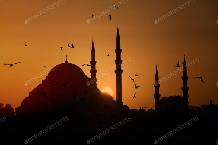 Istanbul mosque at sunset and the seagulls