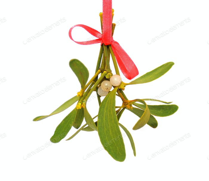 Mistletoe over white