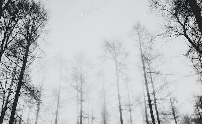 View of a misty forest