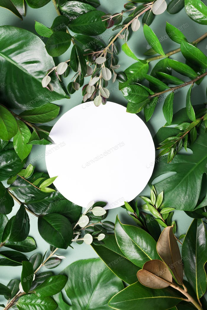 Summer and spring concept. Tropical nature background with green leaves and white empty circle frame