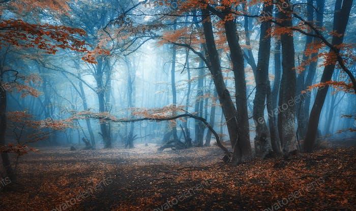 Mystical dark autumn forest with trail in blue fog