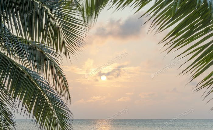 Caribbean Sunrise Palms