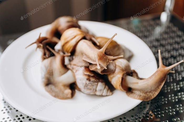 Fresh snails on a white plate ready to serve and eat