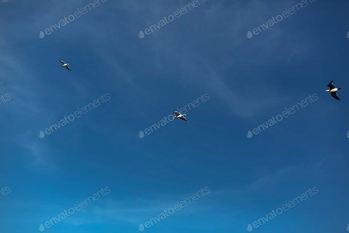 Beautiful view of seagulls flying in blue sky