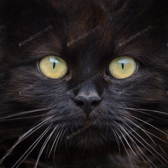 Brown cat portrait