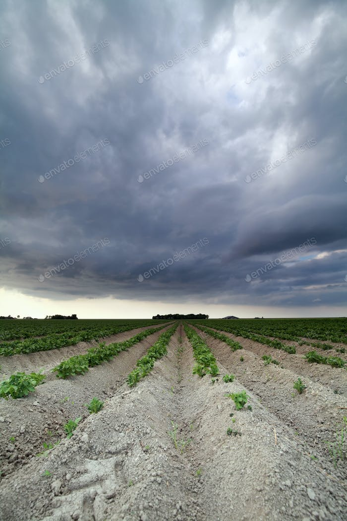 clouded sky over potato field