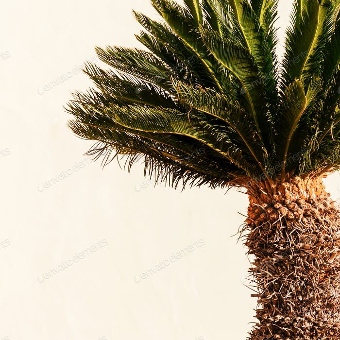 Minimal art. Tropical mood. Mini palms