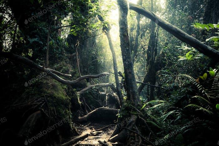 Geheimnisvolle Landschaft von nebligen Wald