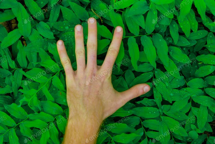 fresh green leaves pattern with hand showing different signs in the foreground