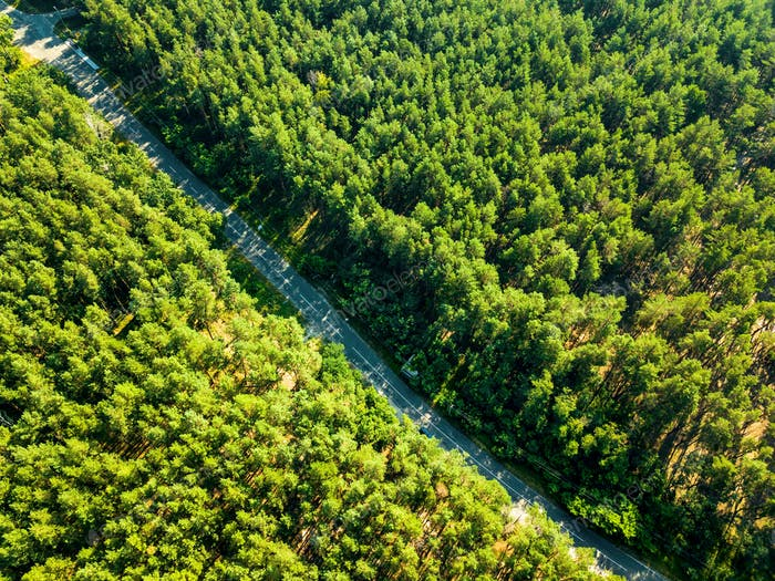 Foliage green forest with asphalt road on sunny day, natural beautiful background. Aerial view from