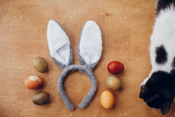 Stylish easter eggs and bunny ears flat lay on gray wallpaper