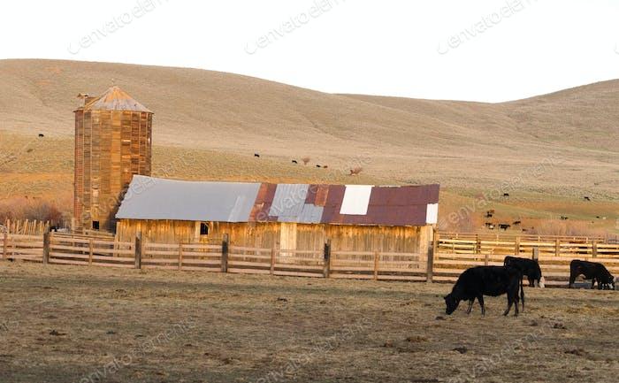 Sunset Rural Hills Rinder Ranch Farm Landwirtschaft Scheune Silo