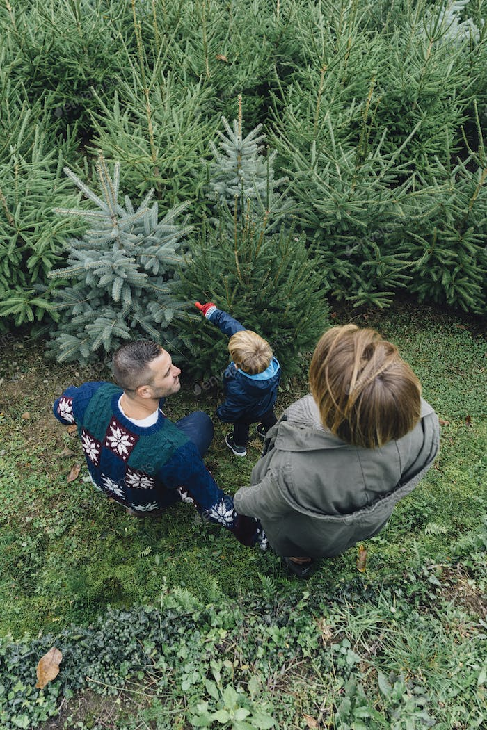 Family buying a Christmas tree in the wood