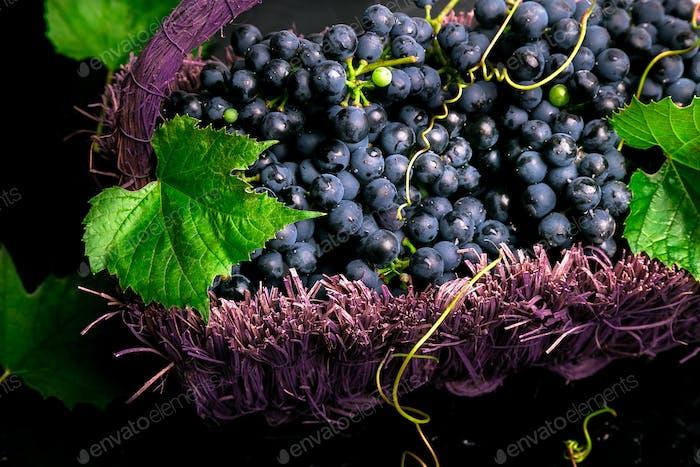 Rotweintrauben in voiolet Korb auf bllack Hintergrund.