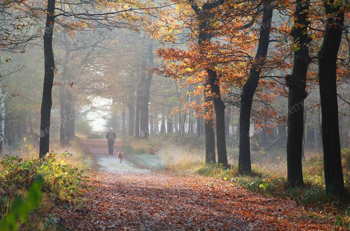 owner with dog walking in autumn forest