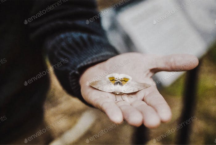Moth in Hand