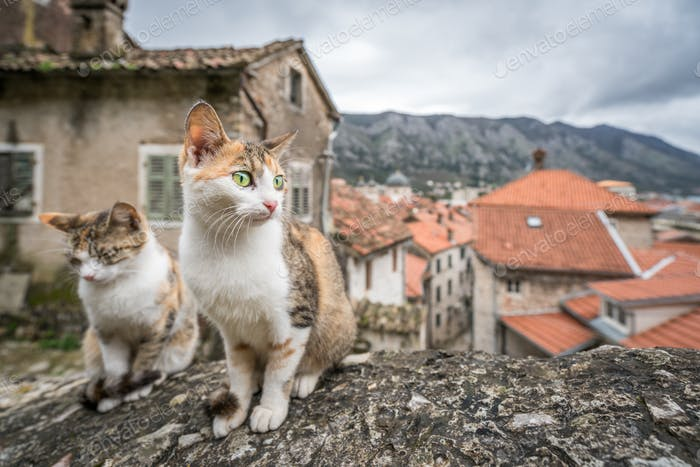 Cute cats sitting on a stone stairs