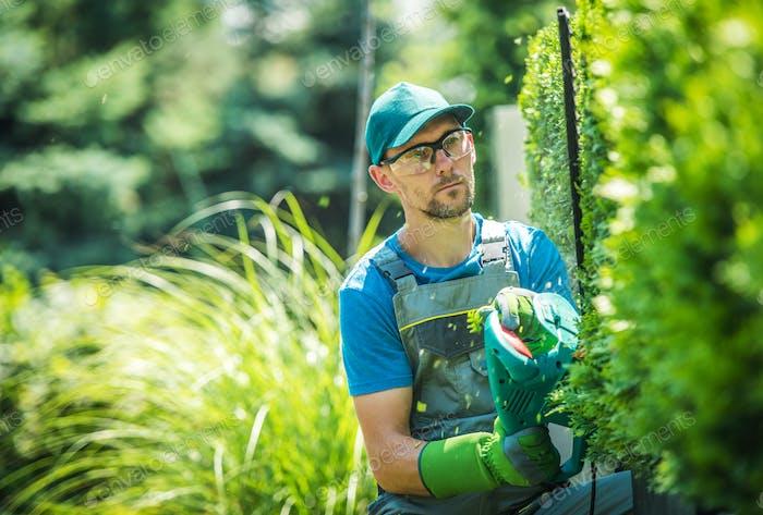Gardener Trimming Thujas